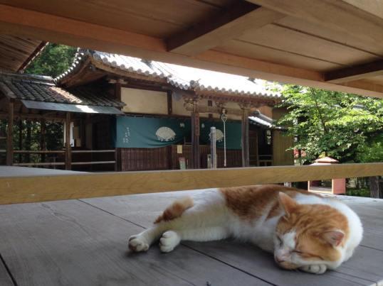 Cat at Temple 67